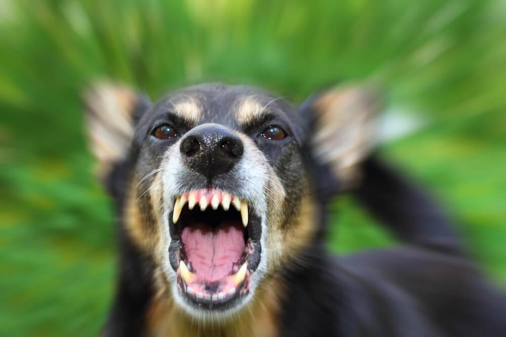 Dog Bite attorney in Columbus, Ohio